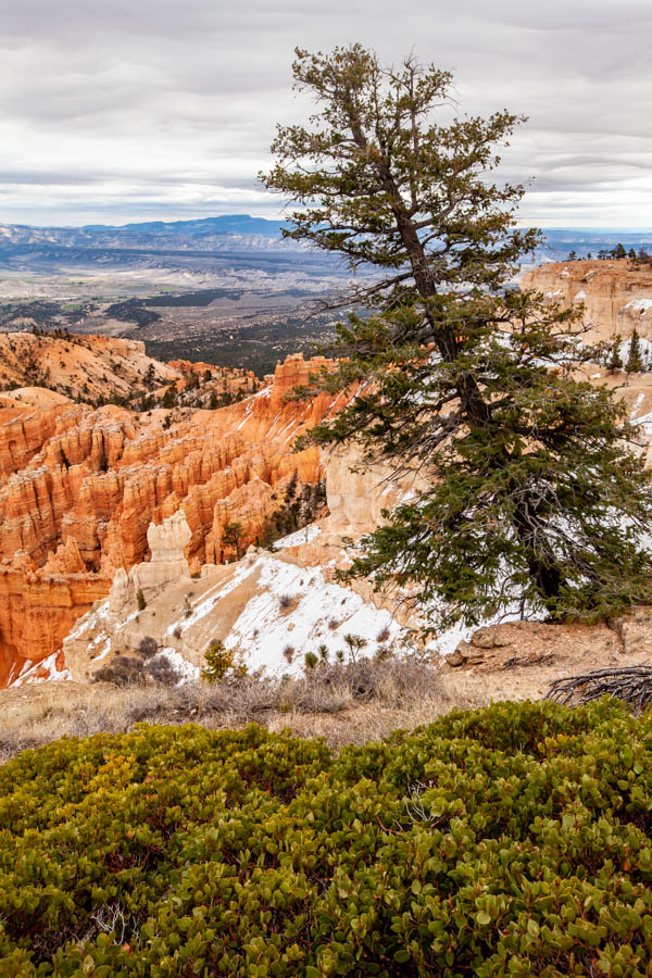 Bryce Point View of the Bryce Canyon National Park Amphitheater #vezzaniphotography