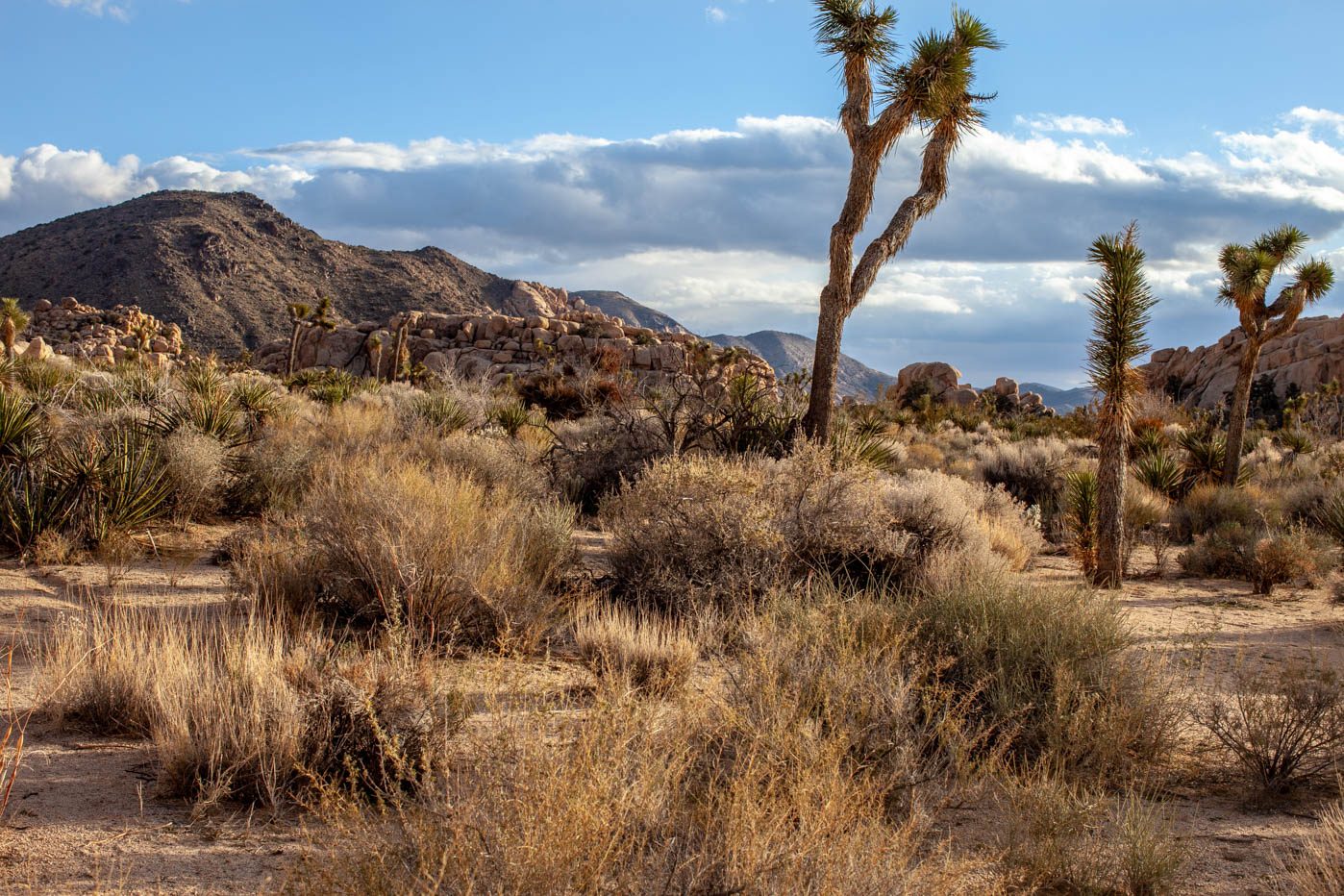 9 Must-see Locations at Joshua Tree National Park - Hidden Valley #vezzaniphotography