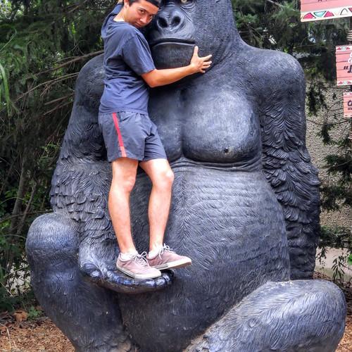 Joel gorilla