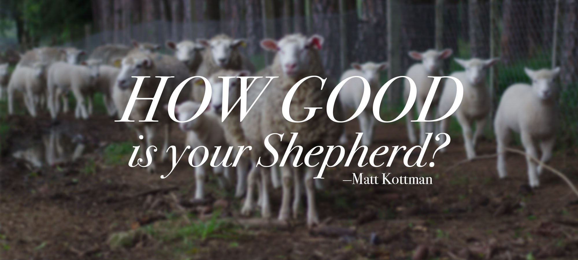 How Good is Your Shepherd?