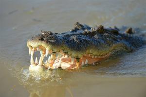 Muere bañista por el ataque de un cocodrilo