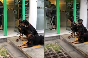 Viral: Mujer va al cajero sin miedo, tres guardianes la prot...