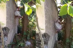 A pesar de tener 88 años todavía puede trepar árboles con gr...