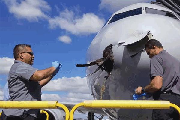 Impacta pájaro contra un avión y queda incrustado en el fuselaje