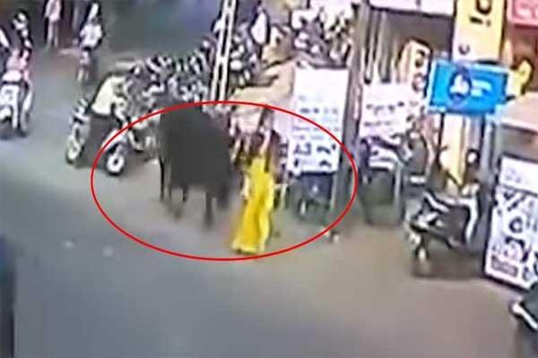 Captan ataque de un toro a una mujer mientras caminaba