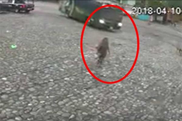 Autobús atropella a mujer y se levanta sólo con raspones