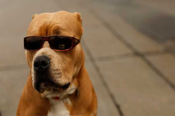 Hombre dice que su perro le disparó