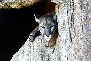 Gobierno de Trump busca limitar protecciones para especies e...