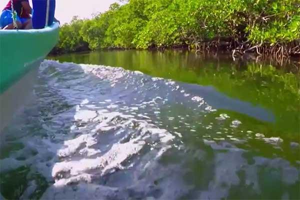Sociedad científica hace un llamado para proteger ríos, mares y océanos