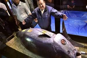 Venden un atún de aleta azul en cifra récord de 333.6 millon...