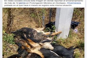Envenan a 37 perros en Morelos