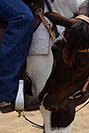 Australian Stock horse and Rider
