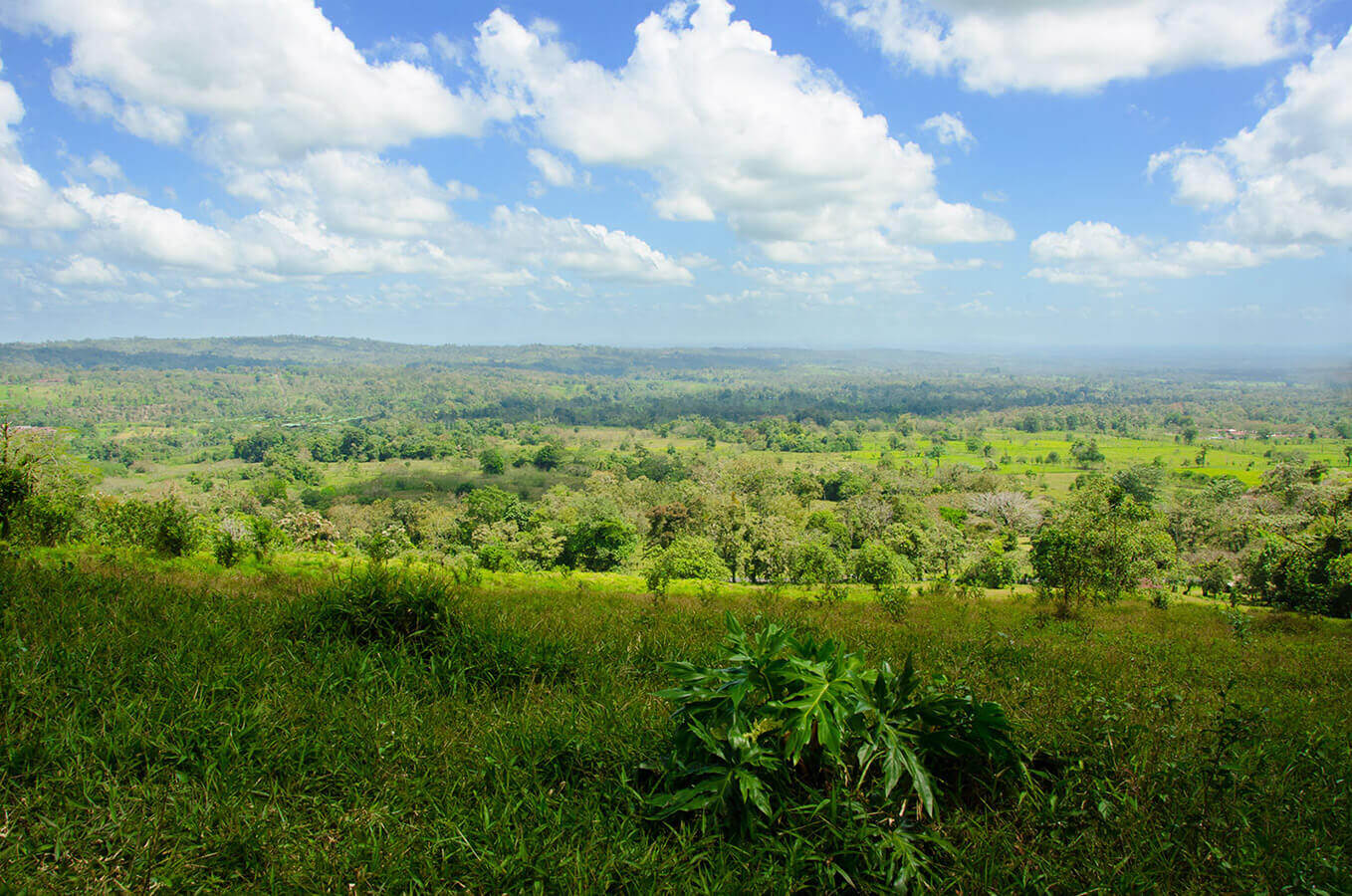 Costa Rica Green Field Landscape by Carrie Morgan