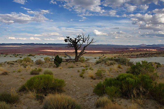 Lone Tree in Utah Desert Photograph by Carrie Morgan