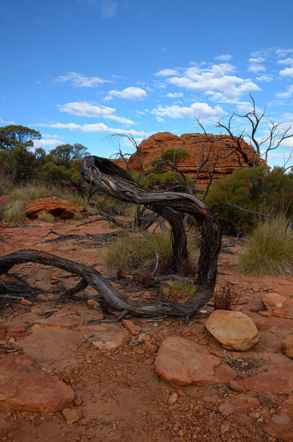 Tree in Kings Canyon Australia