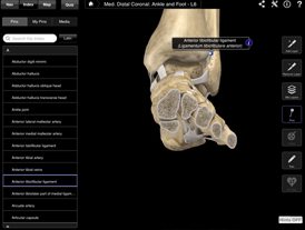 Ankle and Foot screenshot
