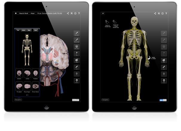 Brain & Nervous System image
