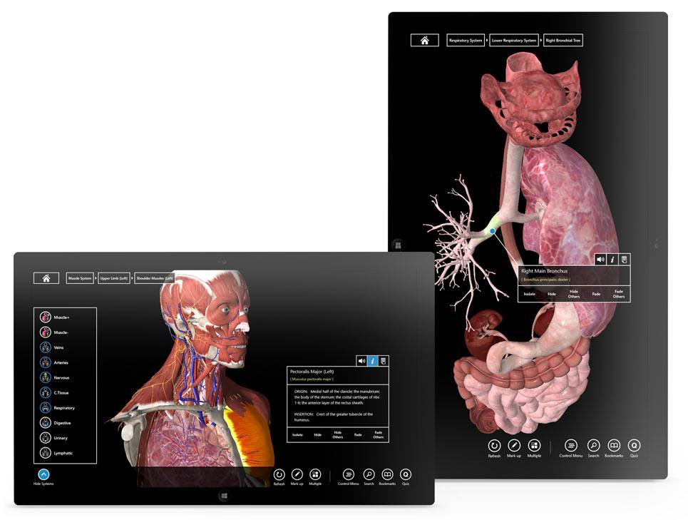 Essential Anatomy Windows Interface Design