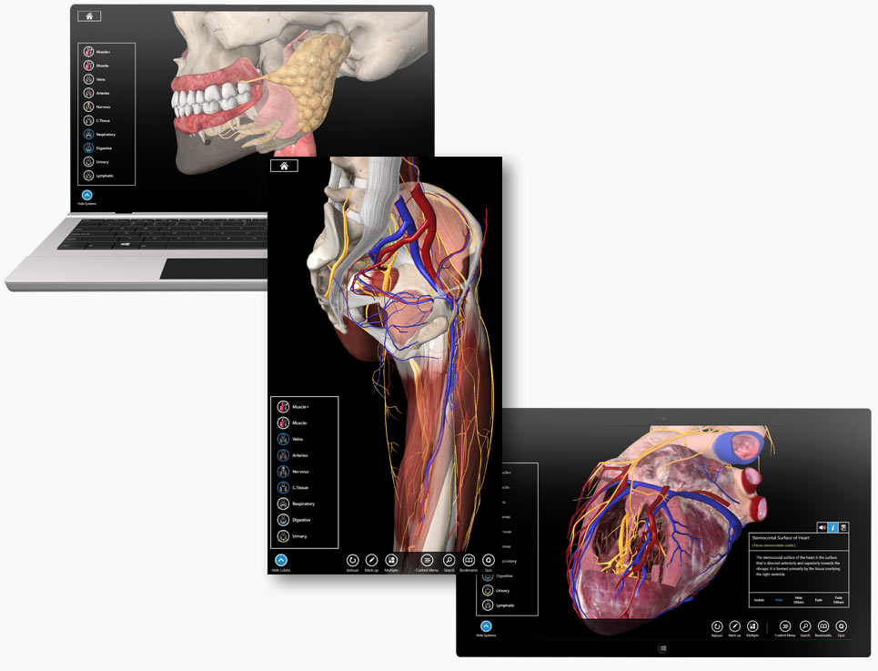 Essential Anatomy iPad and Mac app - Interface Design