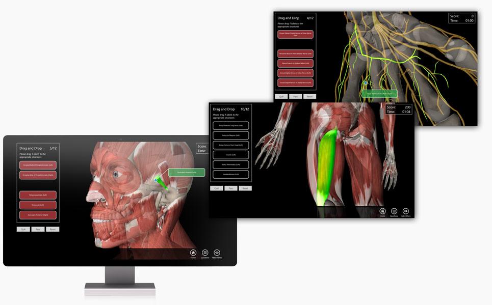 Essential Anatomy Windows - Interface Design