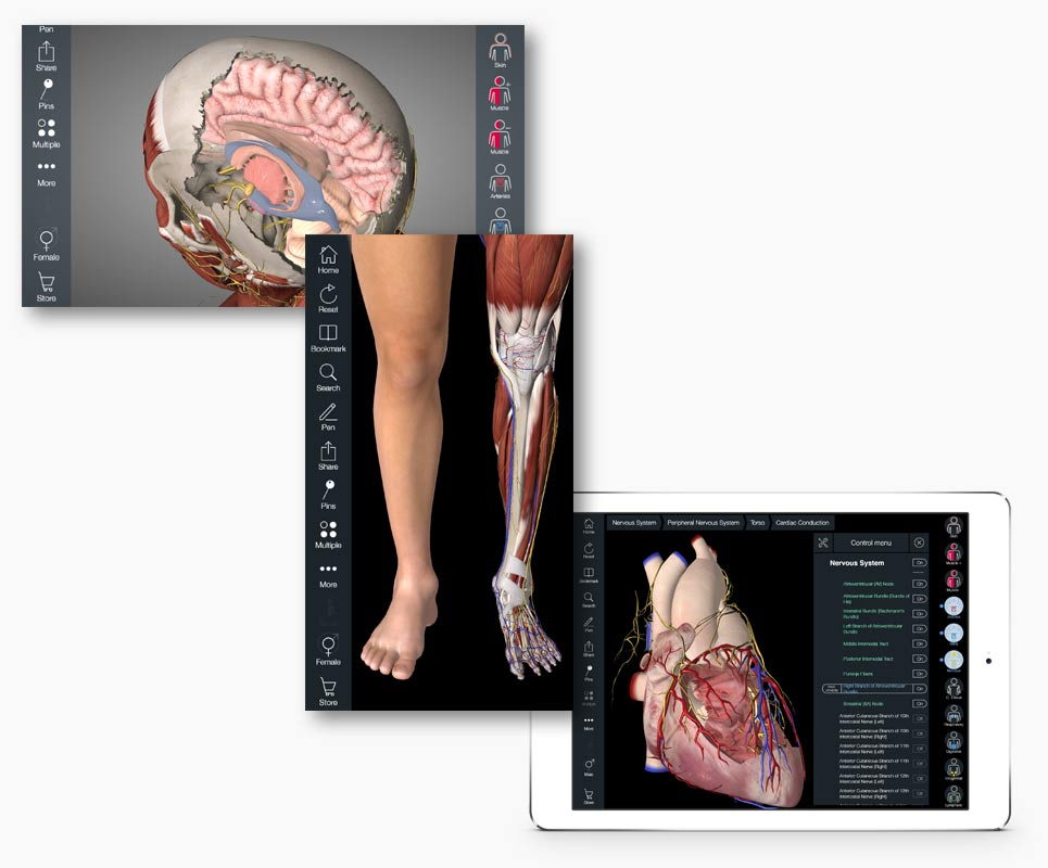 Essential Anatomy iPad - Quality 3D Graphics