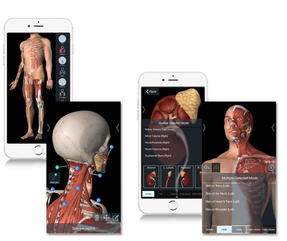 Essential Anatomy iPad - Isolating Stuctures and Multiple Select