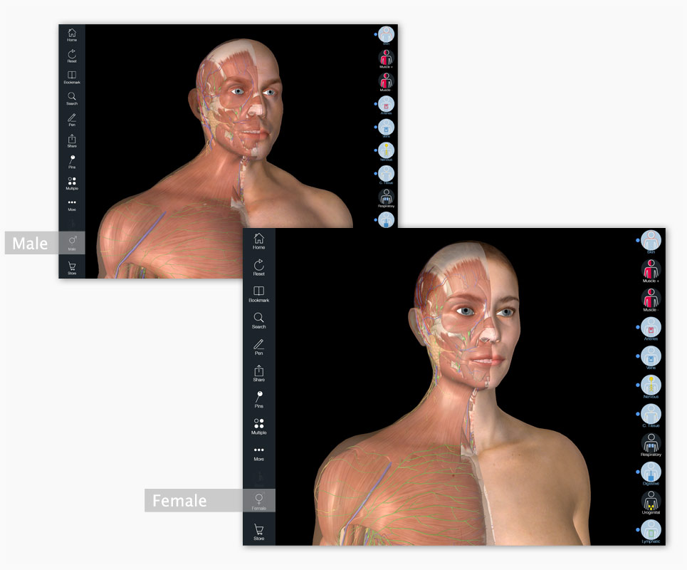 Essential Anatomy iPad - Male & Female models