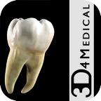 Dental Education icon