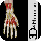 Hand & Wrist Pro
