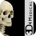 Skeleton System Pro