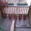An example of some of the herbs and flowers growing on the back deck and stairs.