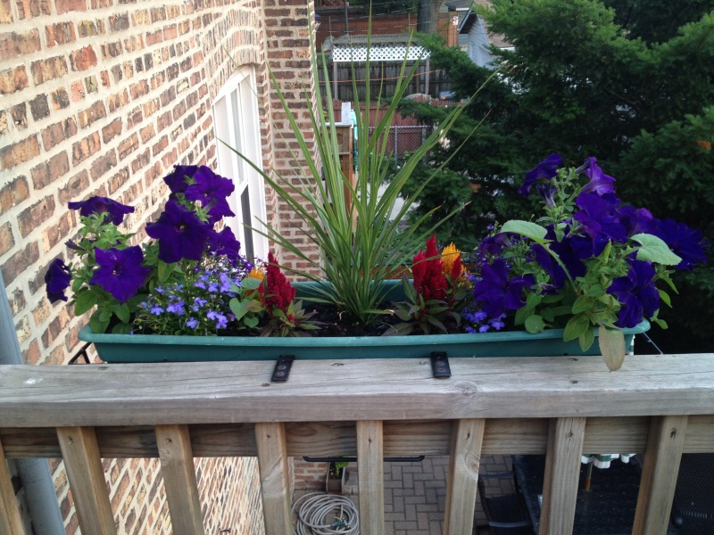 One of the many flower arrangements Lauren plants each spring on the deck rails. LB and I help her.