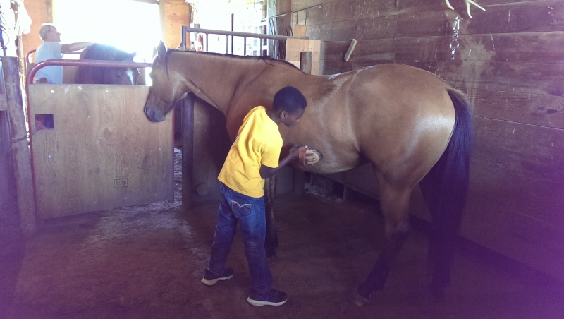 LB learning how to care for horses.