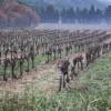 The vineyards in the Cote du Rhone region near Gui's parents' house.