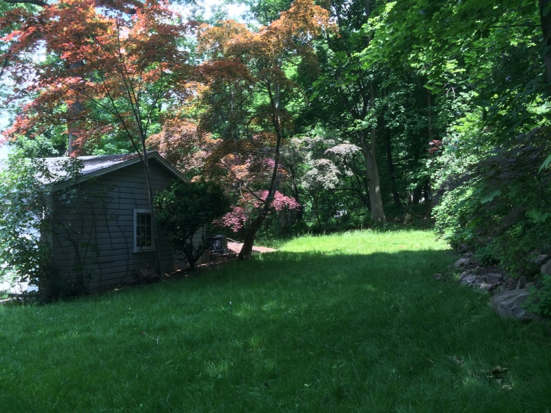 Our backyard, which is surrounded by the forest