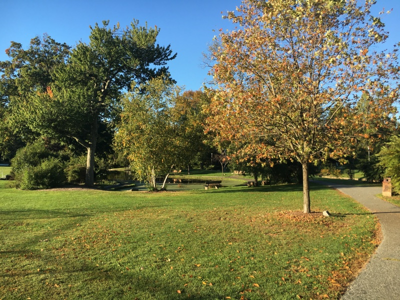Our park down our street where we walk Elle