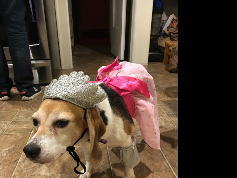 Our dog, Elle, with her Halloween costume