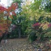 Our yard in the fall
