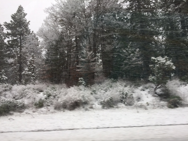 The snow in CA on our drive home
