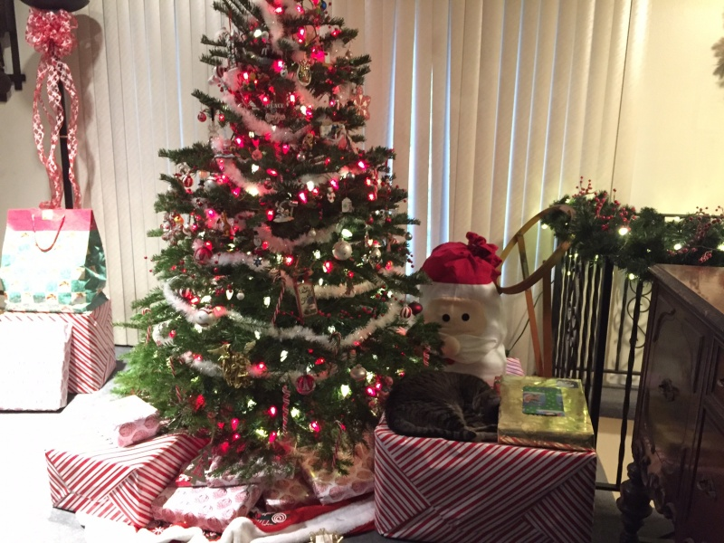 Our tree this year all protected by Chance on the big box