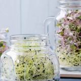 sprout-jars