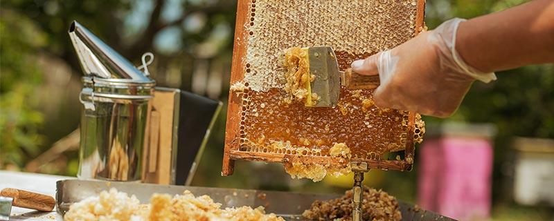 man-scraping-honey