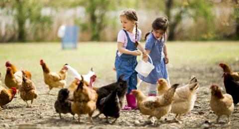 Help Farm Animals on National Farm Animal Day