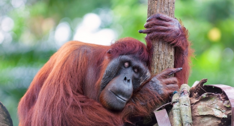 Innocent Animals Suffering at the Hands of the Palm Oil Industry