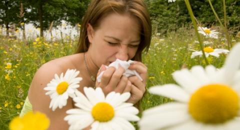 0-611816371-allergies