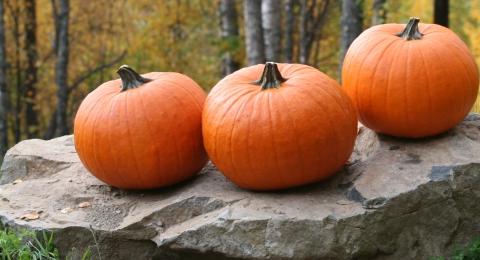 0-621873213-pumpkinsthumb