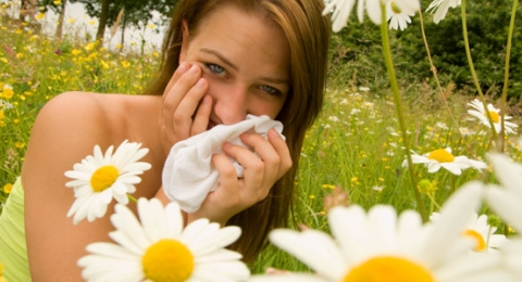 0-709646563-allergiesart1