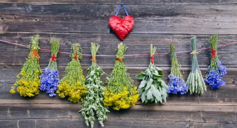 5 Herbs You Can Grow Right In Your Kitchen