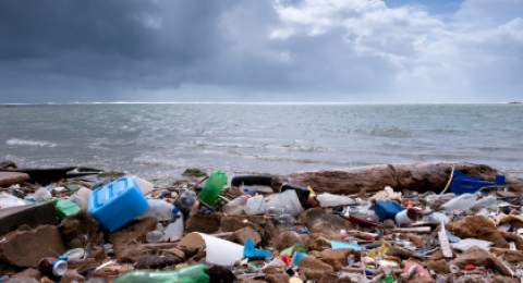Plastic Pollution in Our Bodies