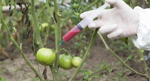 New Experimental GMOs Cause Public Outrage
